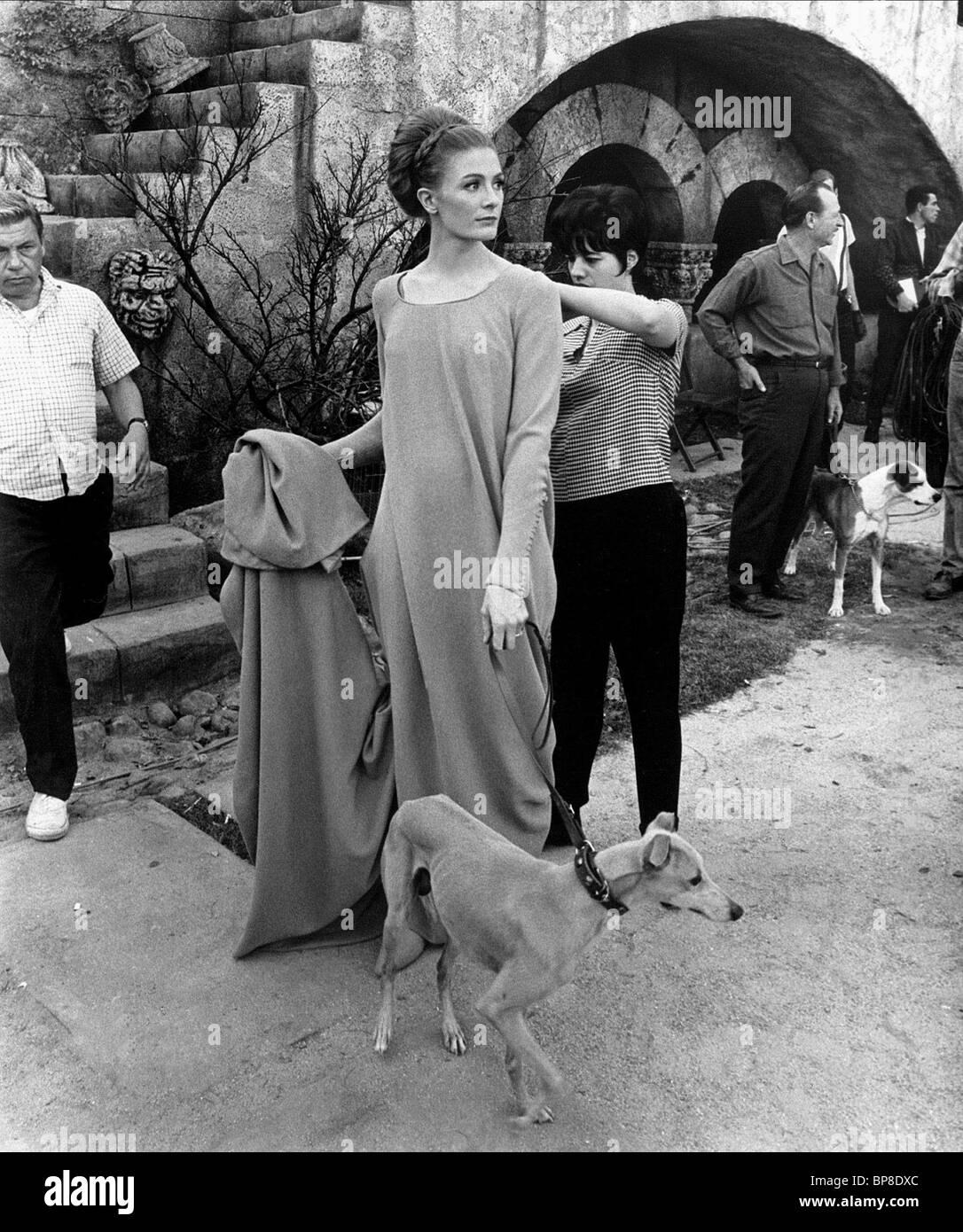 vanessa redgrave amp dog camelot 1967 stock photo royalty