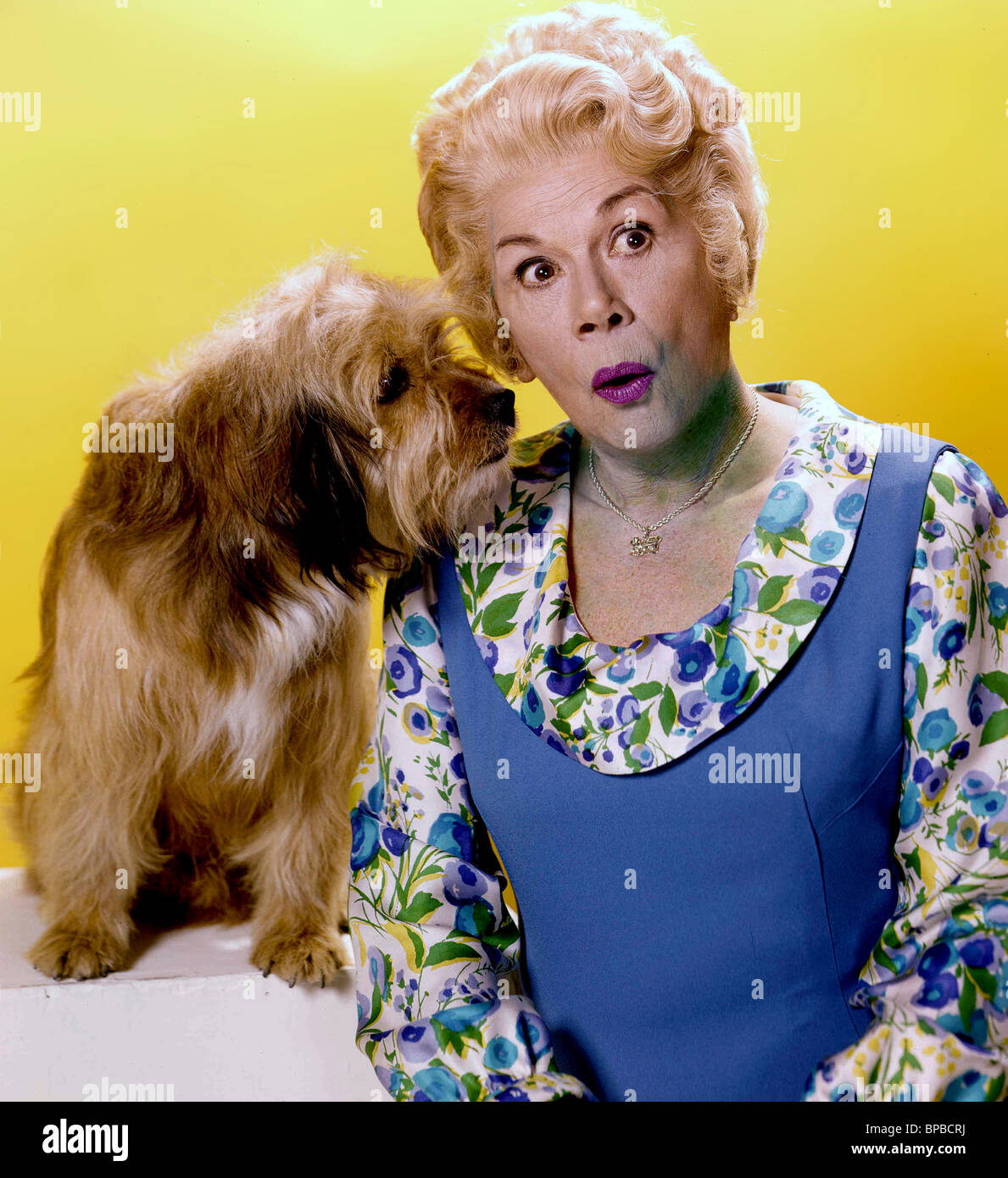 tv dog stock photos tv dog stock images alamy dog bea benaderet petticoat junction 1963 stock image