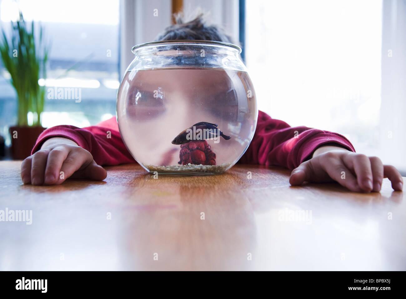 Boy Watching His Pet Betta Fish In A Tank Fishbowl