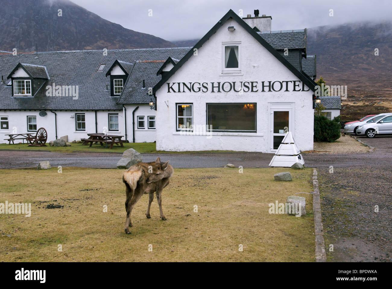 Kings House Hotel Glencoe