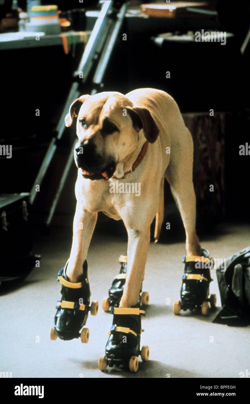 Roller skates for dogs -