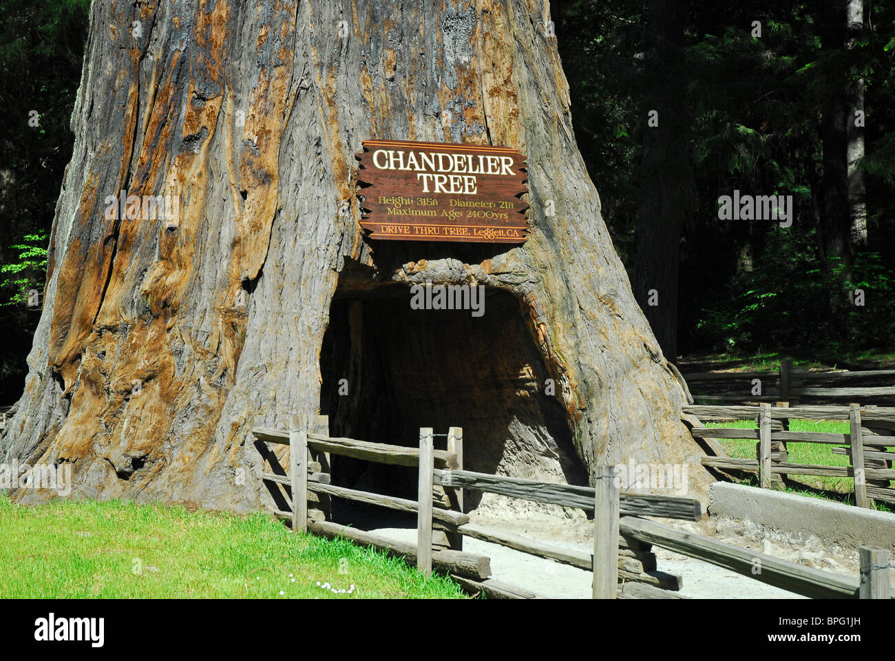 Chandelier drive thru tree near leggett california stock photo chandelier drive thru tree near leggett california arubaitofo Images