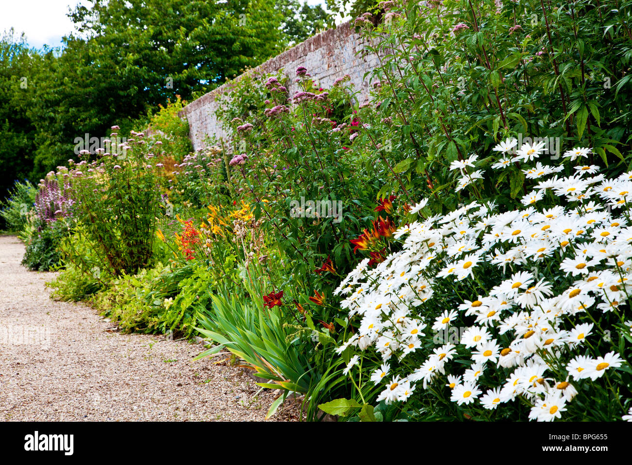 Herbaceous perennial border of summer flowers in a walled english stock photo royalty free - Perennial flowers for borders visual gardens ...