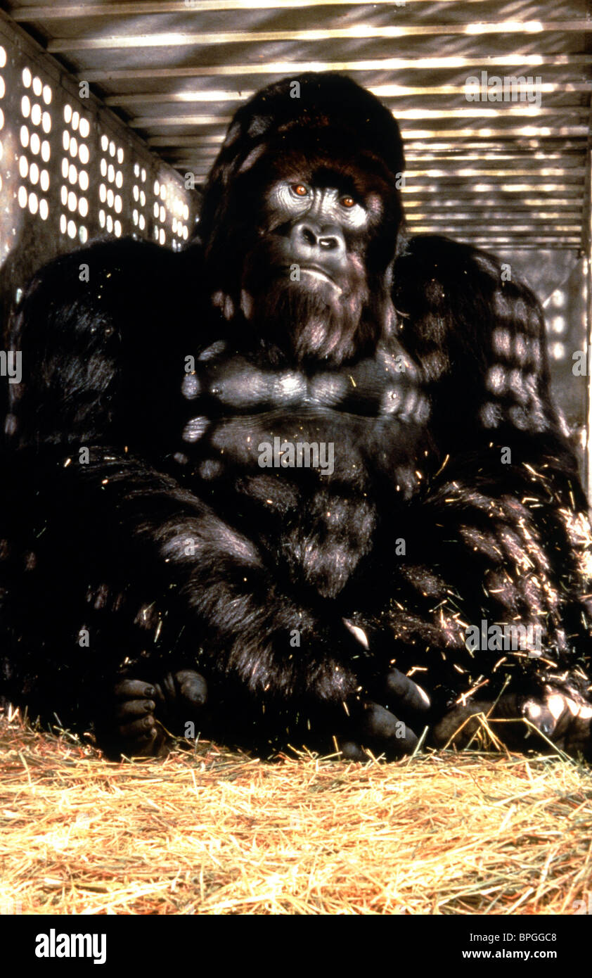 mighty joe young wwwpixsharkcom images galleries