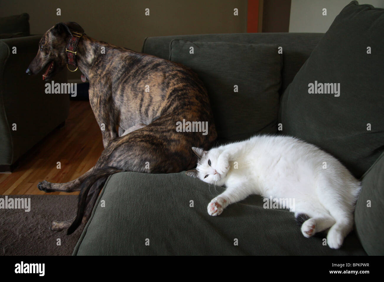 A Large Dog And A Cat Sitting On A Couch.