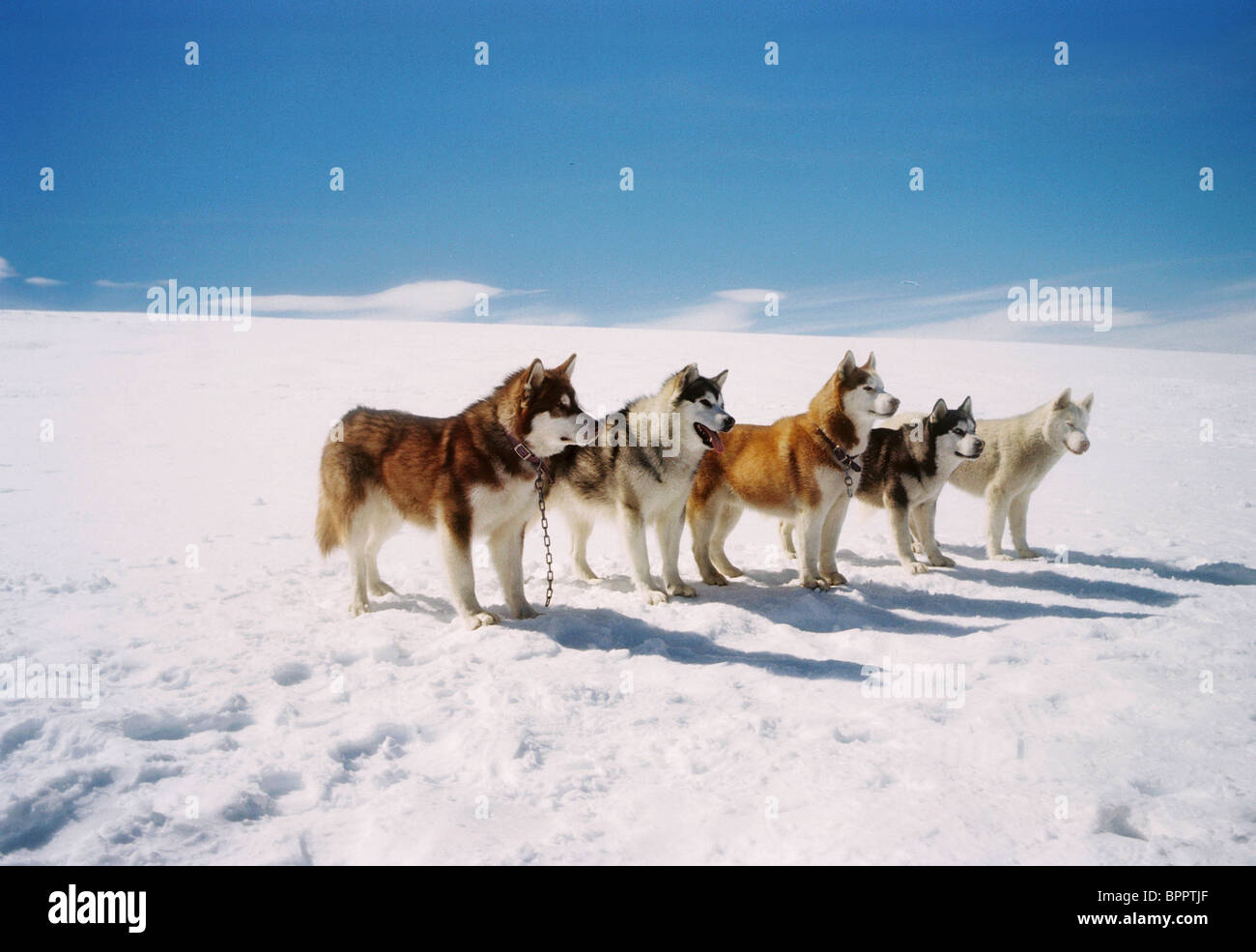 Eight Below Buck | www.pixshark.com - Images Galleries ...