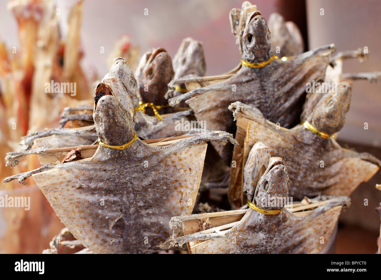 dry turtle for sale at a market in hong kong stock photo royalty