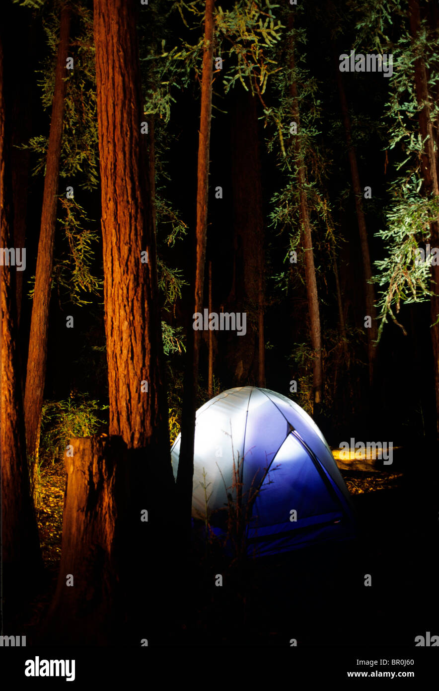 Tent c&ing among the Redwoods Big Sur State Park CA. (night-scene & Tent camping among the Redwoods Big Sur State Park CA Stock ...