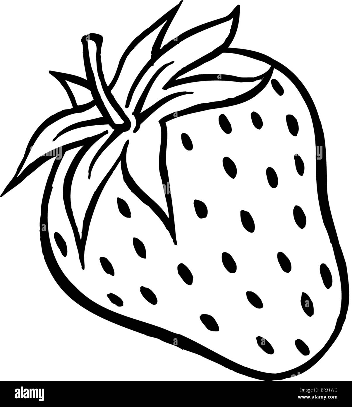 A black and white drawing of a plump strawberry Stock Photo ... for Clipart Strawberry Black And White  75sfw