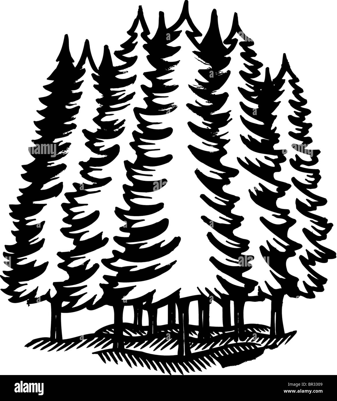 A black and white illustration of an coniferous forest Stock Photo ...
