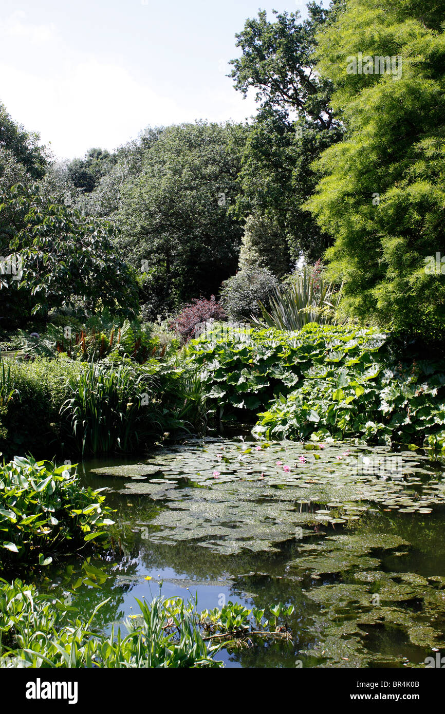 The ornamental ponds and lakes within the beth chatto for Ornamental garden ponds