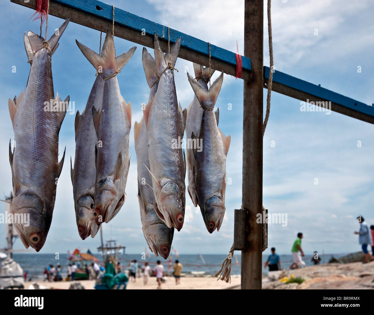 Daily catch of fresh fish hanging out to dry from a for Daily fresh fish