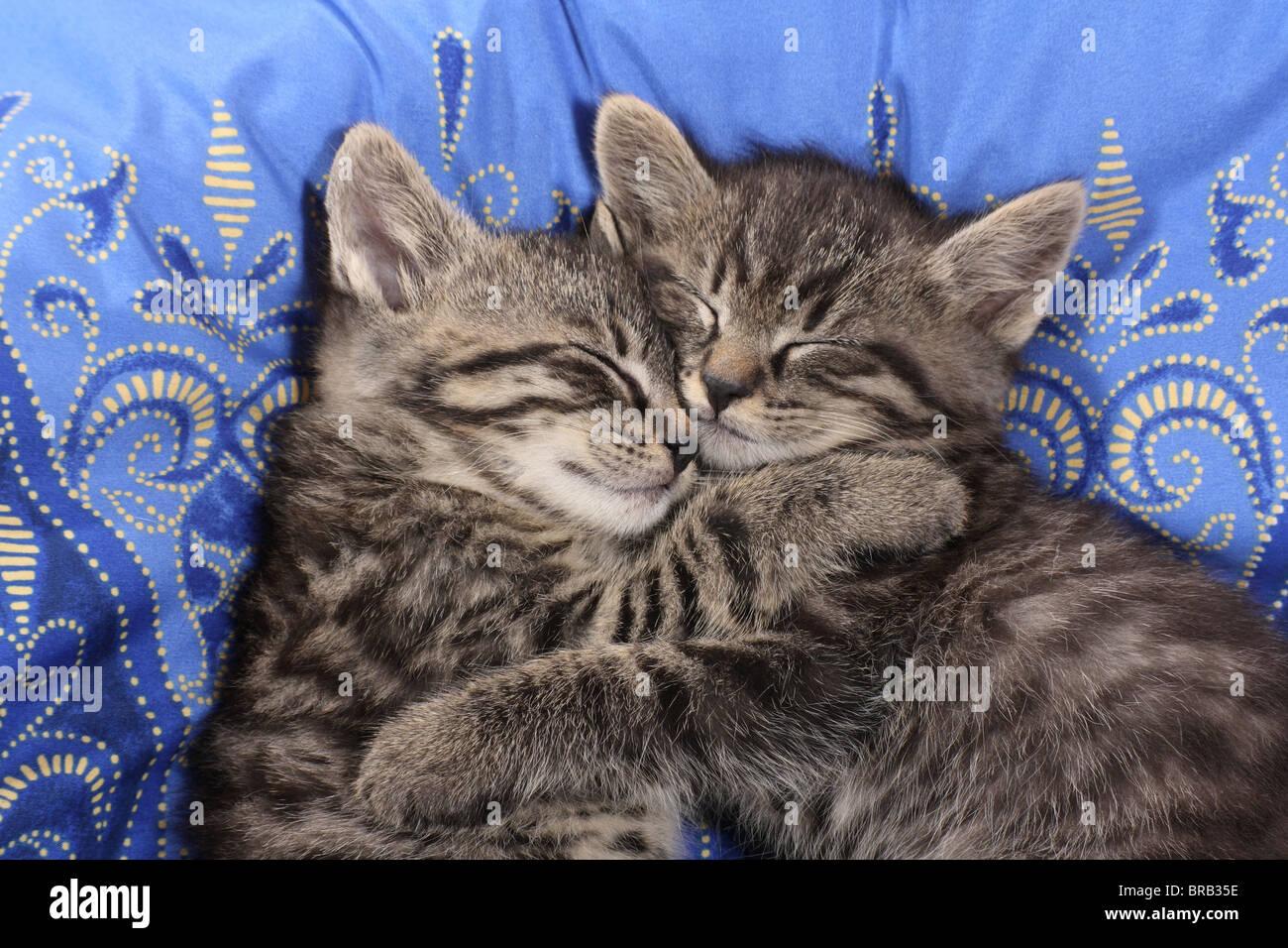 Drowsy Tabby Cat Lying In 28 Images Kitten Animal