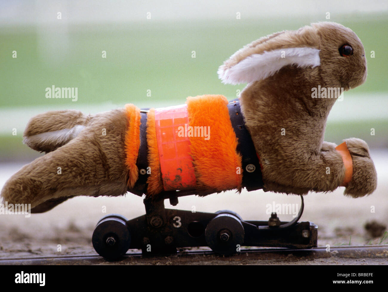 Dog And Rabbit Race Video Download