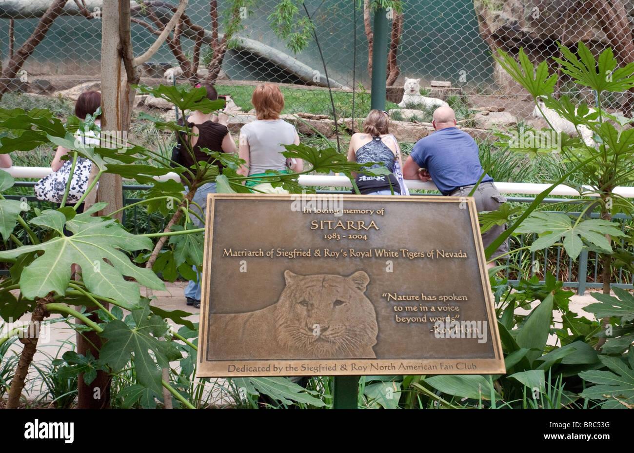 Memorial To Sitarra White Tiger Siegfried Roy 39 S Secret Garden And Stock Photo Royalty Free