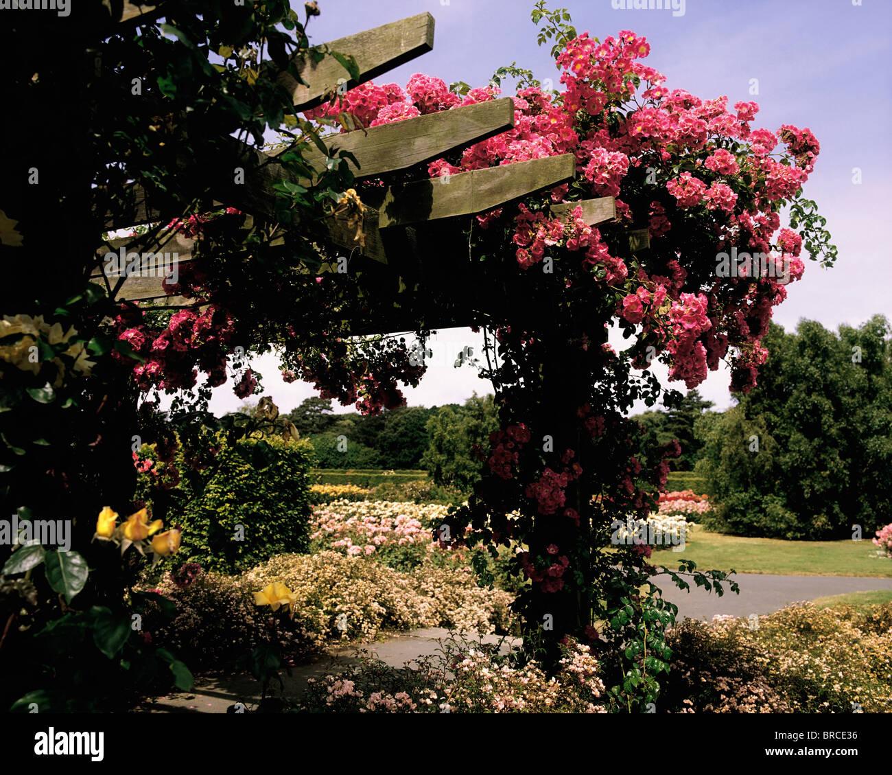 St Anne 39 S Park Rose Garden Clontarf Co Dublin Ireland Stockfoto Lizenzfreies Bild 31621946