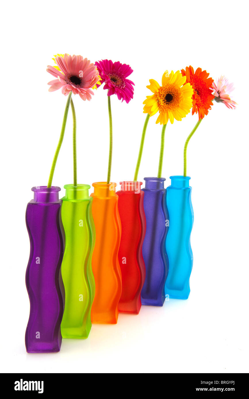 Colorful single gerber flowers in row modern glass vases stock colorful single gerber flowers in row modern glass vases reviewsmspy