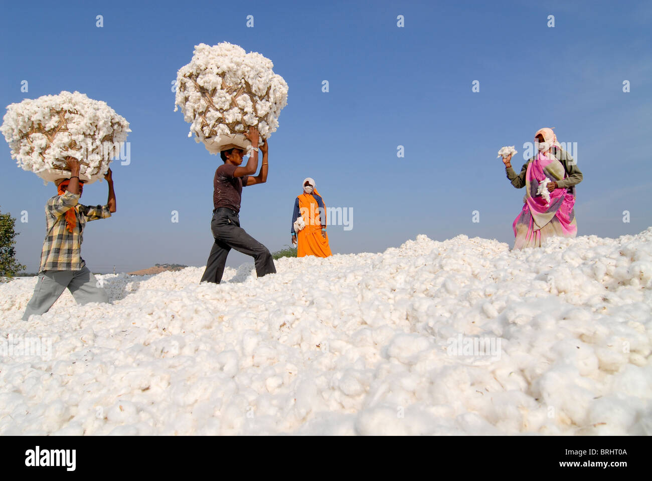 Stock Photo - INDIA Madhya Pradesh , storage place for organic cotton at biore ginning factory - more images available for Hi-res download at www.visualindia.de