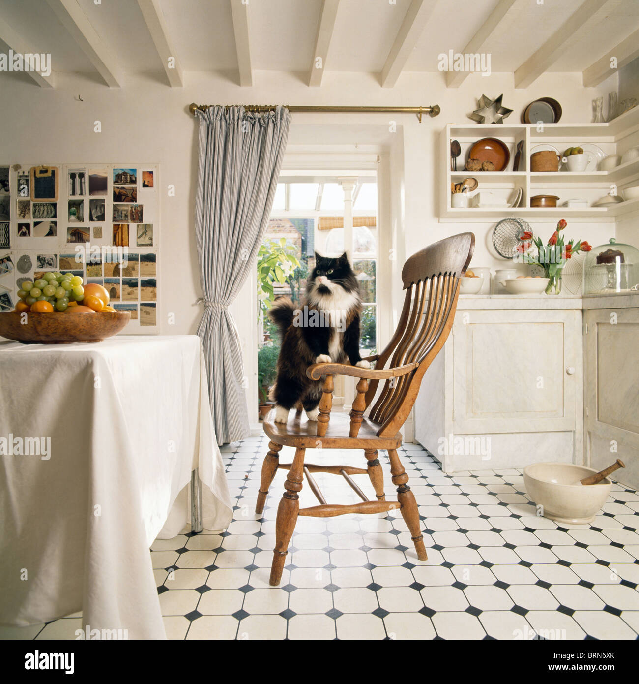 Country Kitchen Floors Cat On Windsor Chair In Country Kitchen With Green Aga And Wooden
