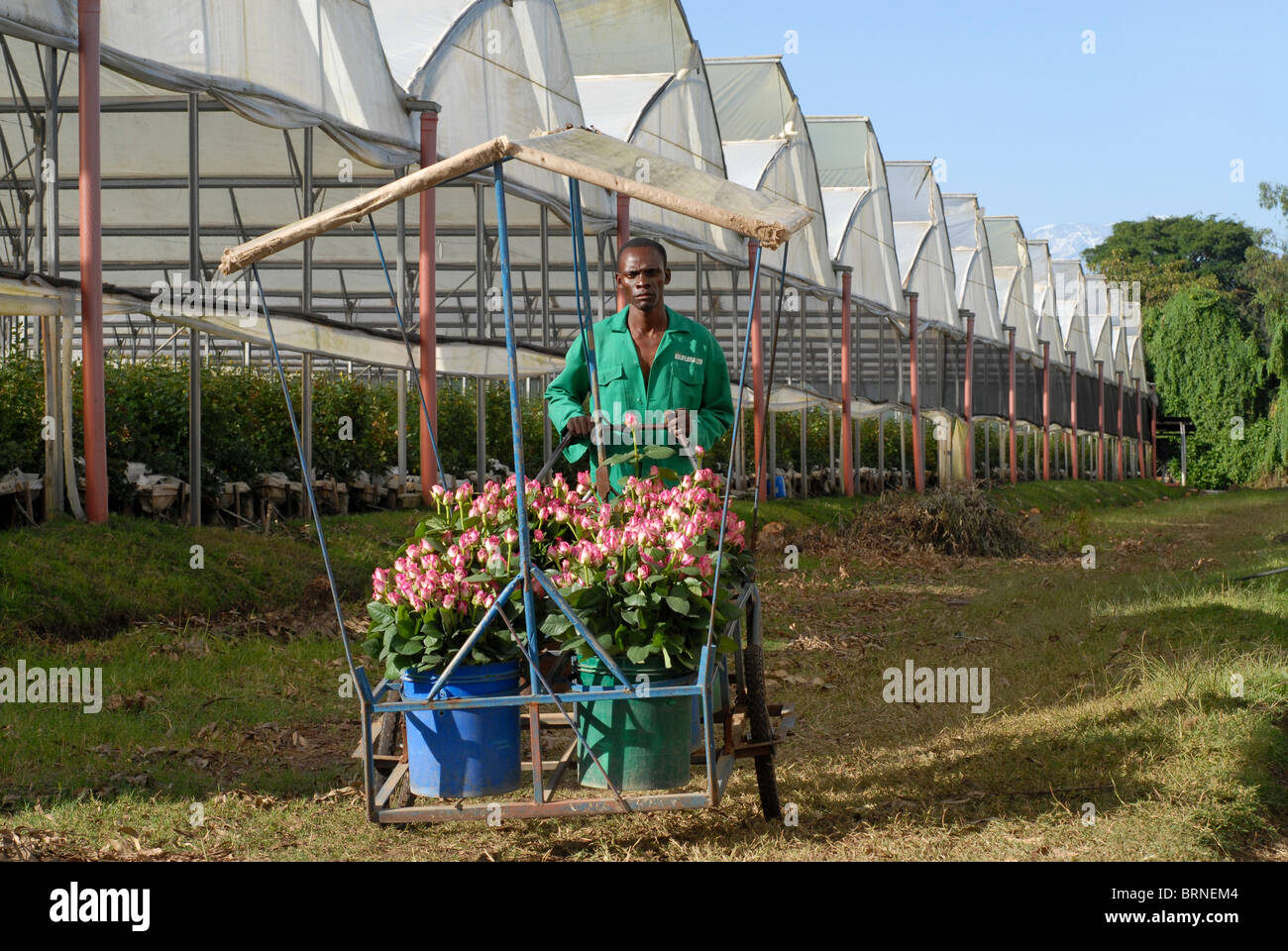 greenhouse farming in tanzania pdf