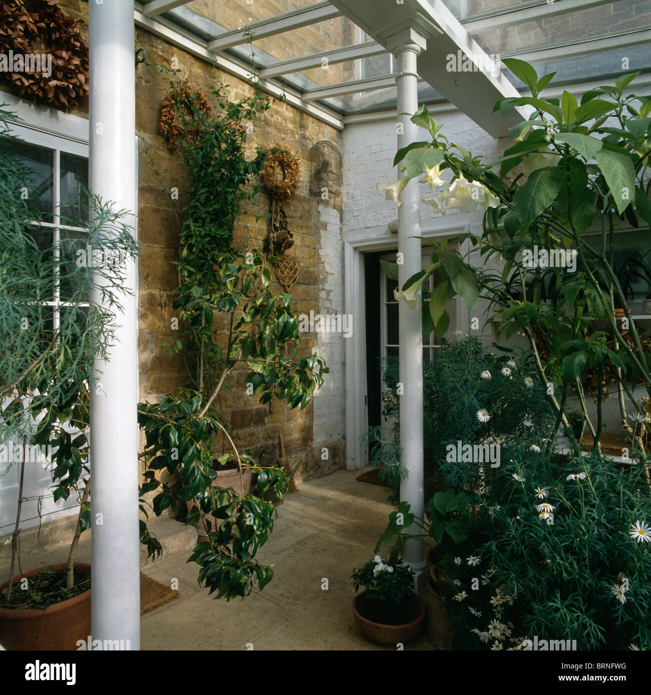 tall green houseplants in atrium style conservatory hall white white metal pillars stock image