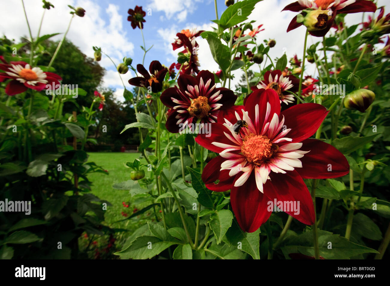 Beautiful Flowers To Attract Bees To Your Garden