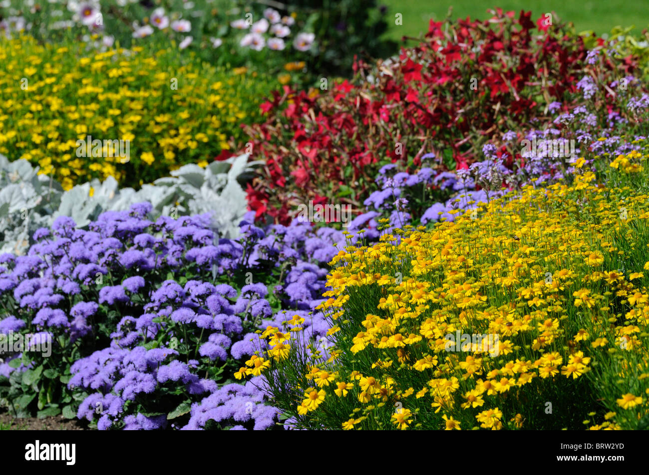 herbaceous perennial garden border mixed plants flowers blooms