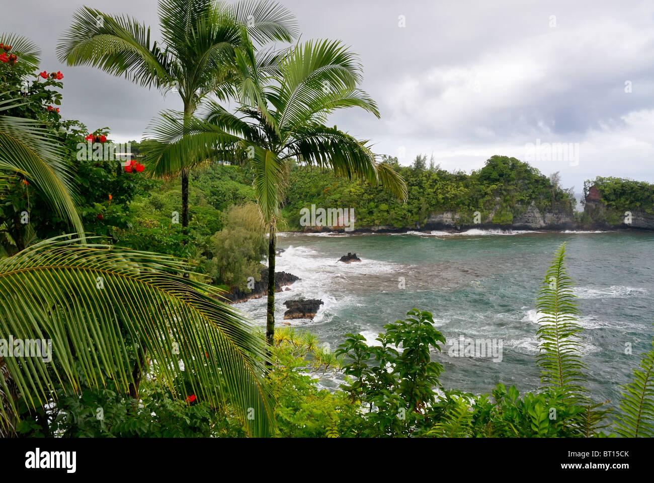Hawaiian Tropical Botanical Garden Garden Ftempo