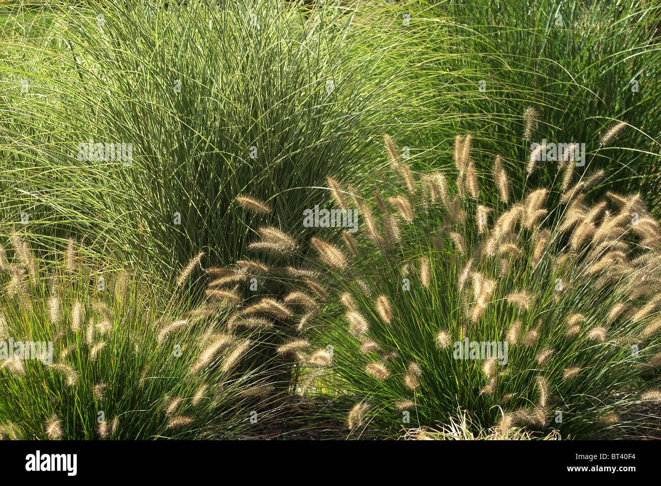 Ornamental grasses in garden stock photo royalty free for Different ornamental grasses
