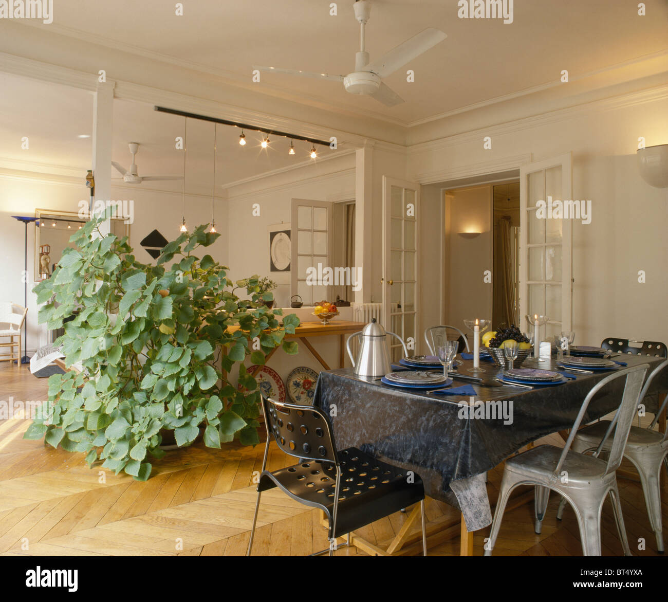 Stock Photo   Tall Houseplant Beside Large Wall Mirror In Apartment Dining  Room With Black Plastic Cloth On Table With Metal Sixties Chairs