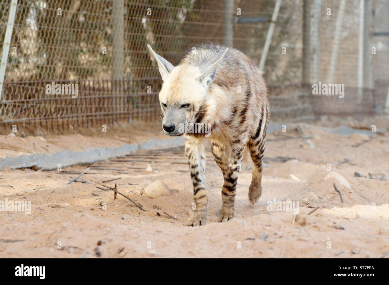 http://c8.alamy.com/comp/BT7FPA/israel-aravah-the-yotvata-hai-bar-nature-reserve-breeding-and-reacclimation-BT7FPA.jpg