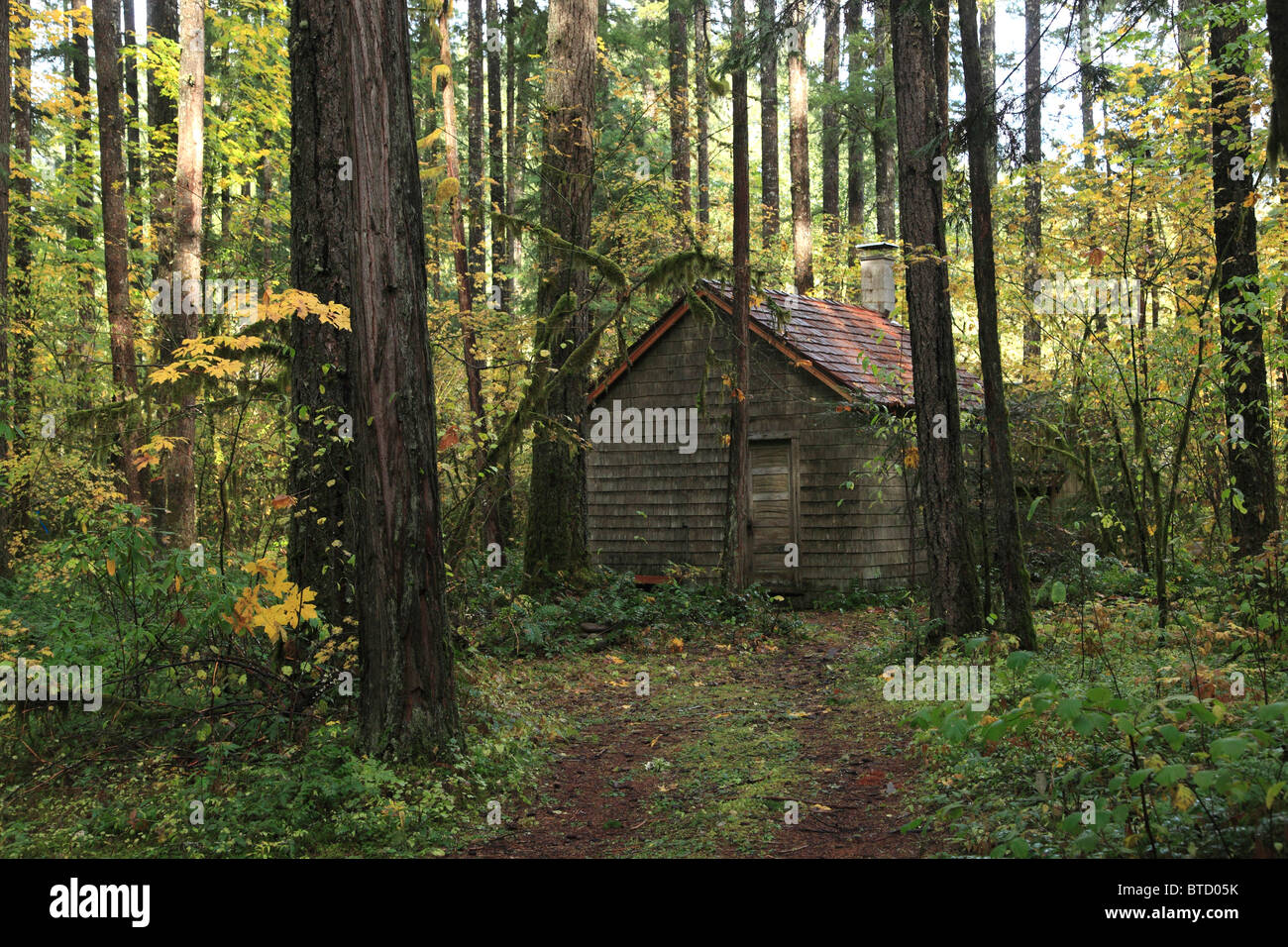 An old cabin in the woods stock photo royalty free image for Cabin in the woods oregon