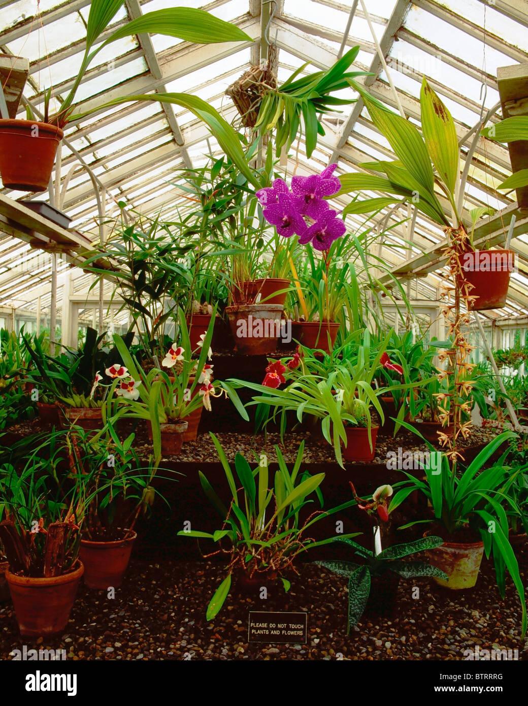 Irish National Botanic Gardens, Dublin, Co Dublin, Ireland; Orchid House