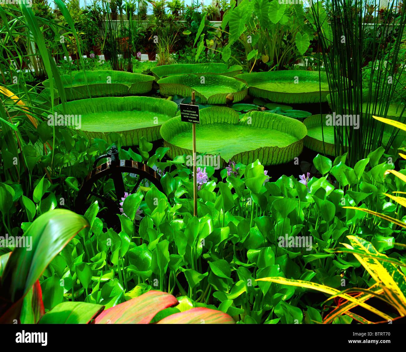 Wonderful Irish National Botanic Gardens, Dublin, Co Dublin, Ireland   Stock Image