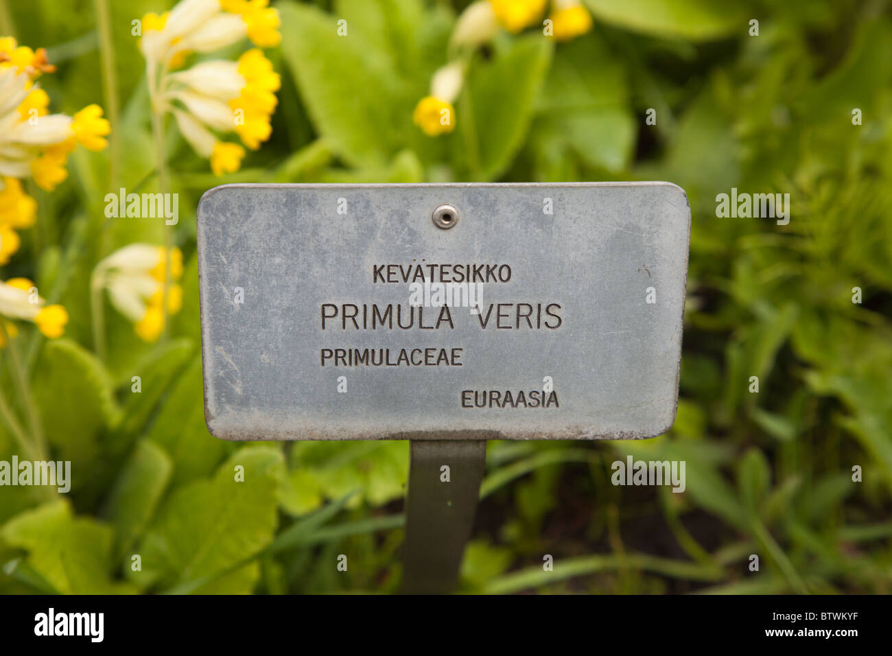 Outdoorioutdoorimg Tag: Name Tag At Botanical Garden Stock Photo, Royalty Free