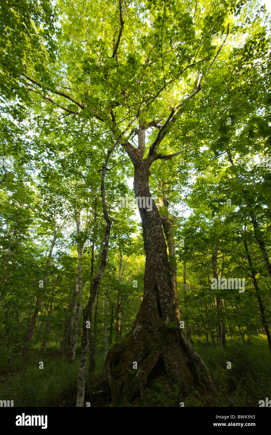 Tree Natural Resource Facts