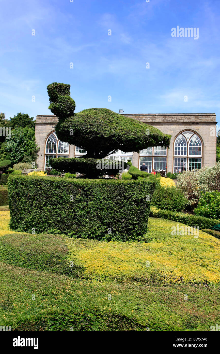 Topiary Designs Part - 27: Stock Photo - The Box Privet Hedges And Topiary Designs In The Orangery At  Warwick Castle