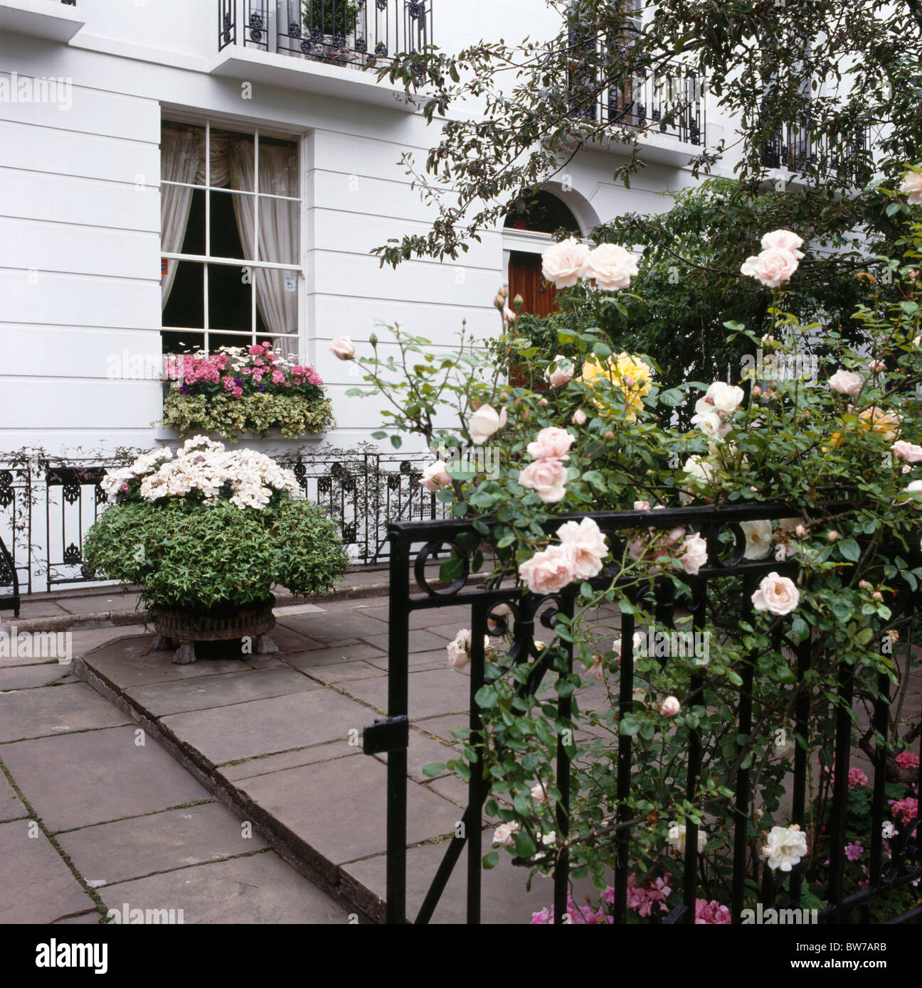 Pink Climbing Roses On Iron Railings In Front Of Paved