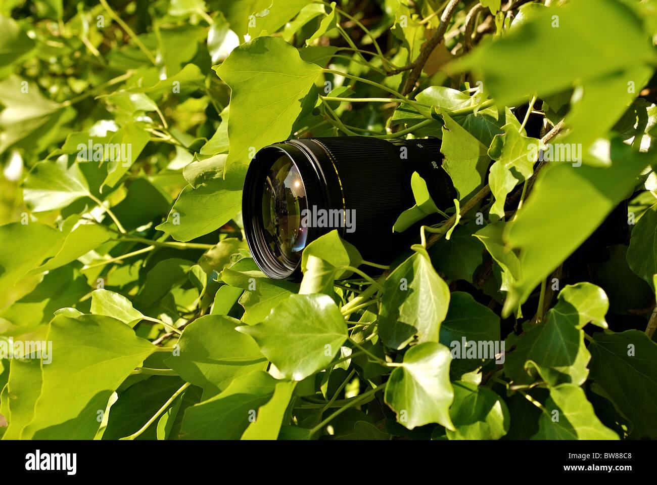 Бесплатно камера в кустах фото 295-381