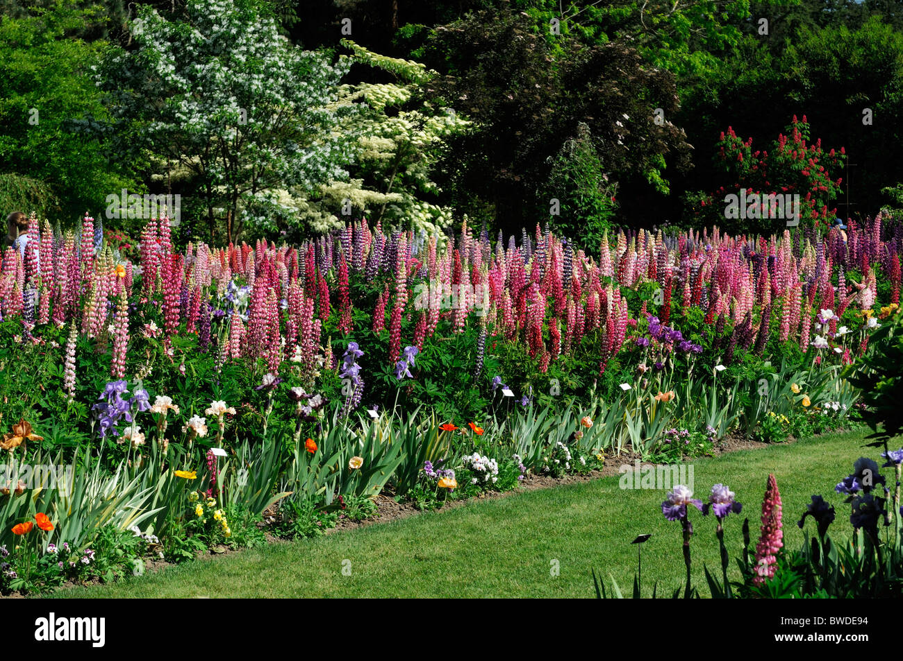 Perennial flowers for borders gallery flower decoration ideas perennial flowers for borders gallery flower decoration ideas perennial flower border ideas choice image flower decoration mightylinksfo