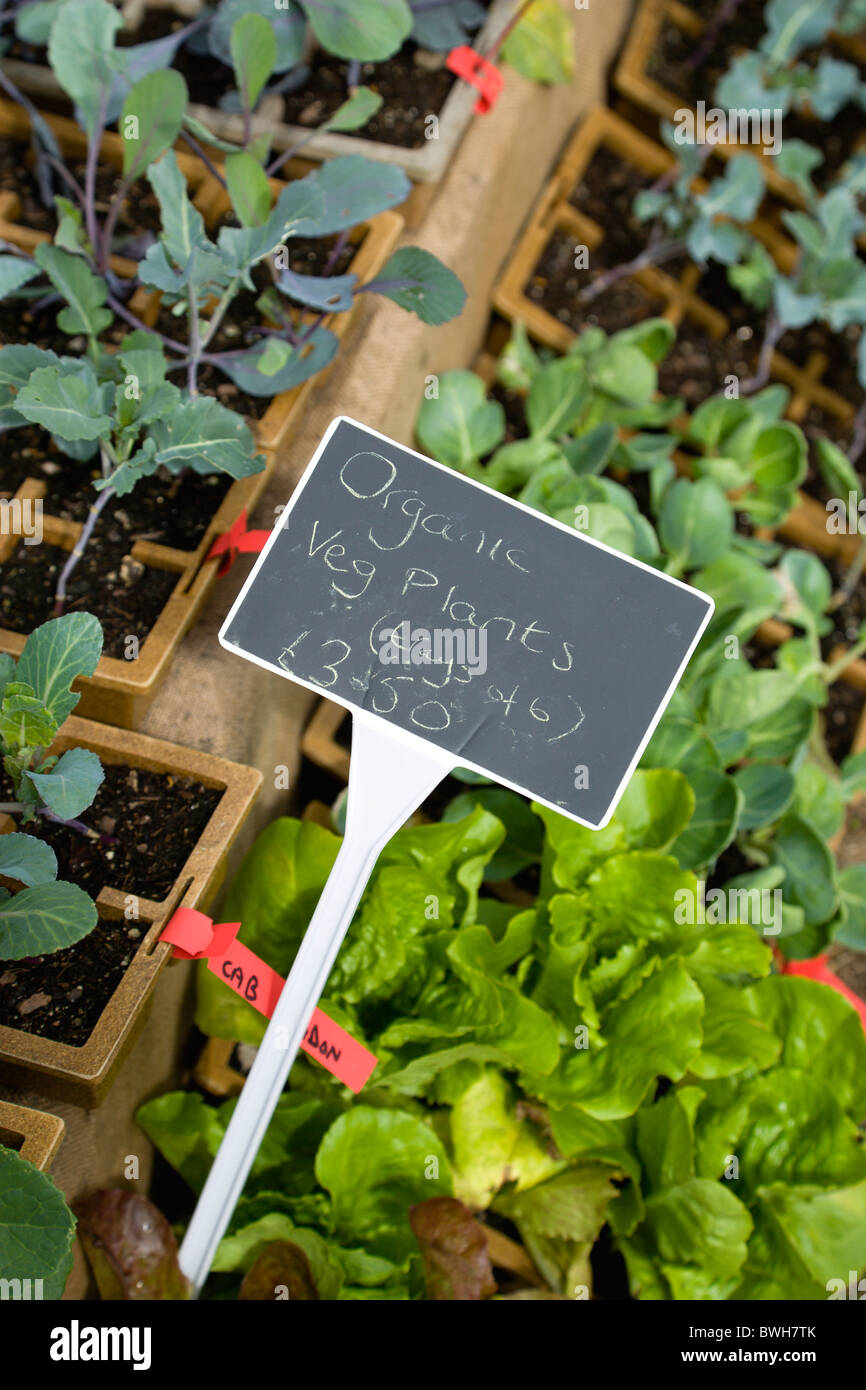 Agriculture, Organic, Vegetables, Selection Of Young Organic Vegetable  Plants For Sale And Ready For Planting Out