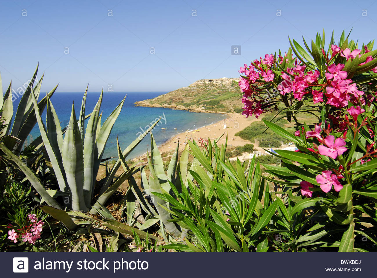 Garden with a sea view, beach at the Rambla Bay, Gozo Island, Malta ...