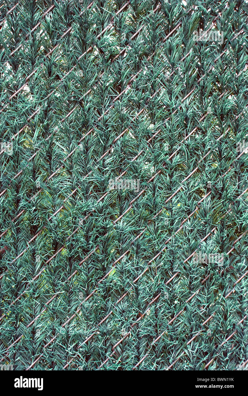 Artificial hedge fence material in chain link to