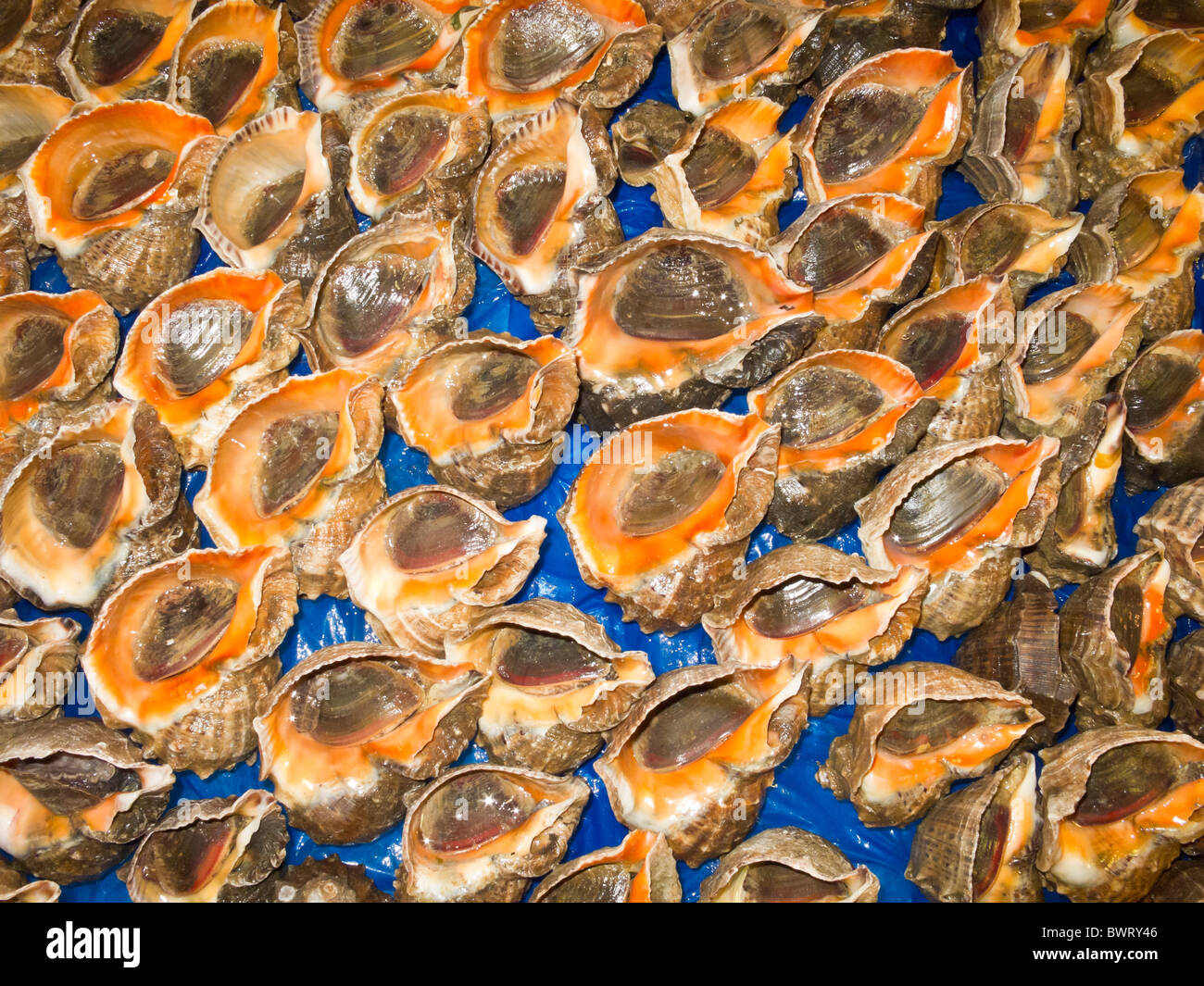 Molluscs for sale noryangjin fish market seoul south for Stock fish for sale
