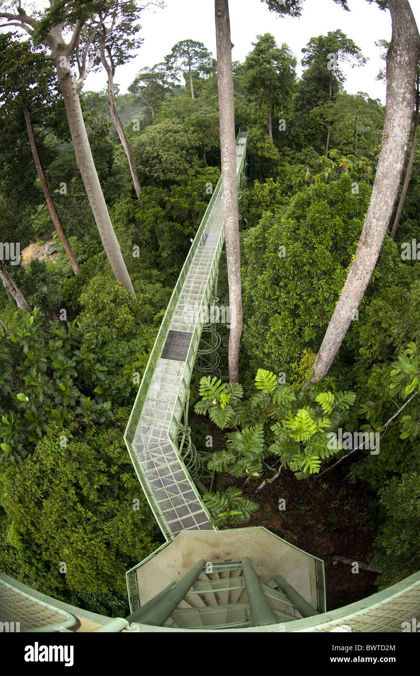 Rainforest Discovery Centre Tree Canopy Walkway Sepilok Park Sandakan Sabah Kalimantan Malaysia tree trees rainforest & Rainforest Discovery Centre Tree Canopy Walkway Sepilok Park ...