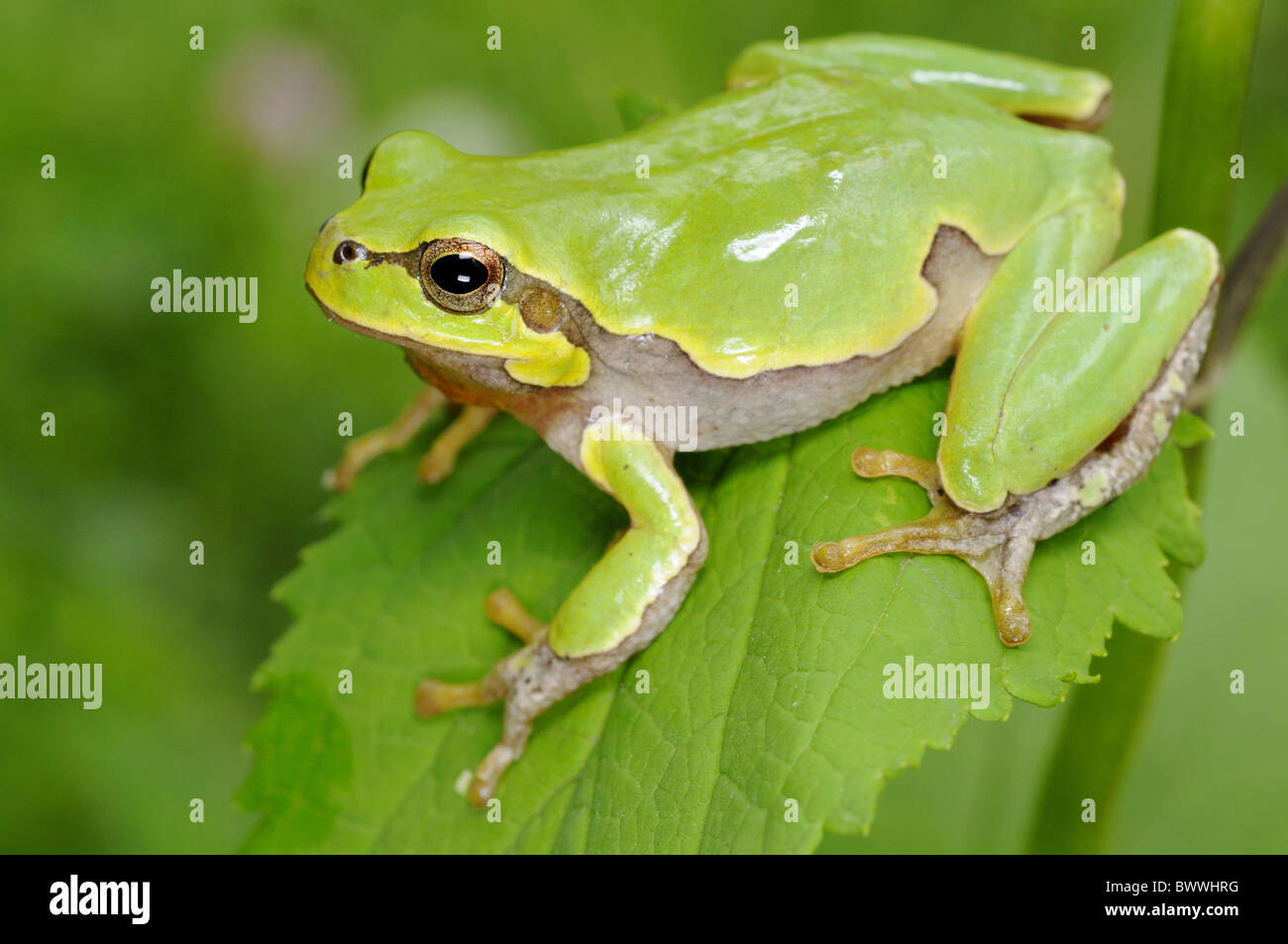 Pictures of amphibians for kids
