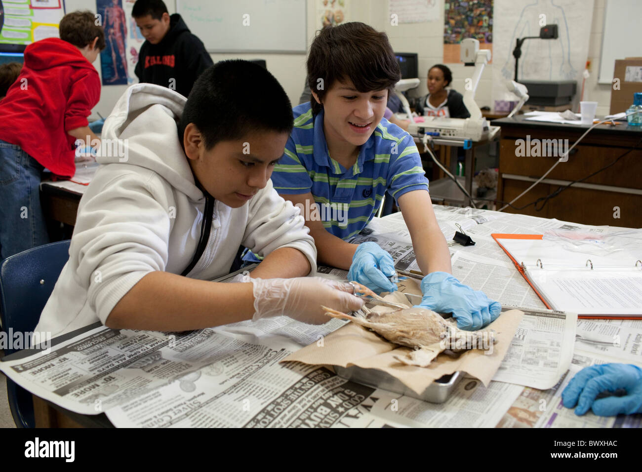 animal dissection Dissection dissection is the cutting into of a dead animal to learn about the anatomy or physiology of the animal it involves cutting into a dead animal while vivisection entails cutting into or dissecting a live animal.