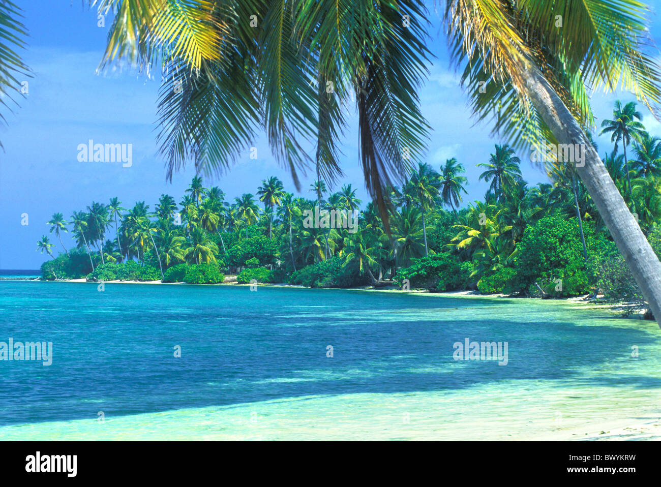 palm beach hindu personals The palm beach daily news, (aka: the shiny sheet) has been serving palm  beach since 1897 covering town of palm beach, south palm beach.