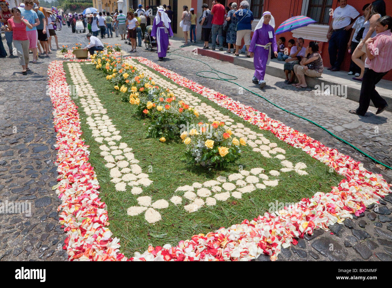Antigua guatemala an alfombra carpet of flowers pine for Antigua alfombras