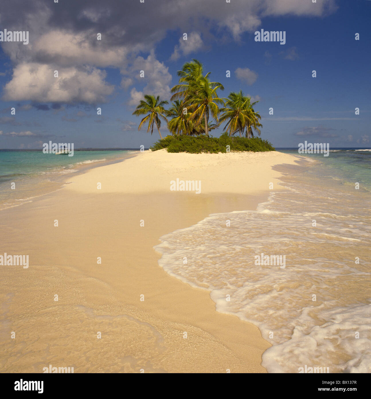 Palm Tree Island: Lonesome Island Isle Beach Seashore Palm Tree Island Palm